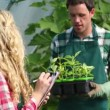 Young gardener showing plants to buyer — Stock Video