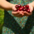 Close up on woman walking to camera holding cherries — Vídeo Stock