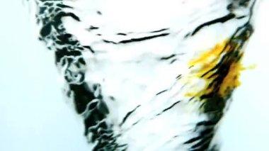 Tinta amarela, rodopiando em redemoinho de água no fundo branco — Vídeo Stock