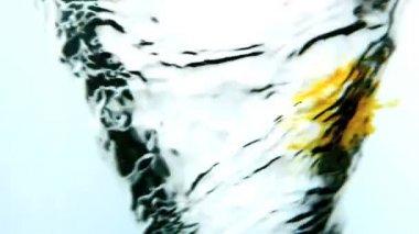 žlutý inkoust kroužení do vody whirlpool na bílém pozadí — Stock video