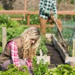 Young couple working in a garden — Stock Photo #33435449