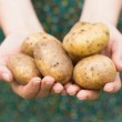 Hands holding some potatoes — Stock Photo #33435543