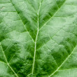 Close up of a leaf — Stock Photo