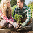 Stock Photo: Smiling young couple planting shrub