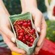 Hands holding carton of redcurrants — Stock Photo #33436801