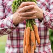 Farmer holding bunch of organic carrots — Stock Photo
