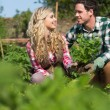 Happy couple gardening together — Stock Photo
