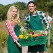 Happy couple showing vegetables  — Stock Photo