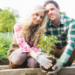 Stock Photo: Young couple planting shrub
