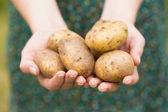 Hands holding some potatoes — Foto Stock