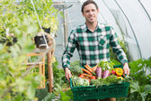 Proud man presenting vegetables in a basket — Stock Photo