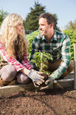 Smiling young couple planting a shrub — Foto Stock