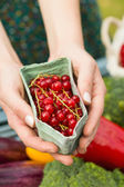 Hands holding carton of redcurrants — Stock Photo