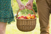 Basket of apples being carried by a young couple — Stock Photo