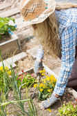 Pretty blonde woman working with a rake — Stock Photo