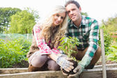 Young couple planting a shrub — Stok fotoğraf