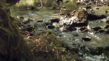 Video of watercourse in nature — Stock Video