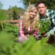 Young couple holding a plant — Stock Photo #33441997