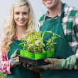Happy couple showing carton of small plants — Stock Photo