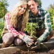 Happy young couple planting shrub — Photo #33444095