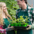 Laughing couple holding carton of small plants — Stock Photo