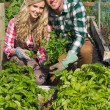 Young couple crouhing in their garden holding a plant — Stock Photo