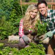 Smiling young couple crouchng in their garden holding a plant — Stock Photo #33446177