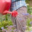 Woman watering her flowers with red watering can — Stock Photo