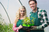 Young couple showing carton of small plants — Foto Stock