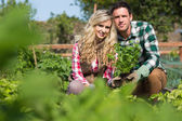 Young couple holding a plant — Stock Photo