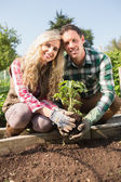Happy young couple planting a shrub — Foto Stock