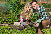 Smiling young couple crouchng in their garden holding a plant — Stockfoto