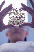 Low angle view of researcher analyzing sprouts in petri dish — Stock Photo