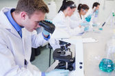 Busy researchers working on experiments in the lab — Stock Photo