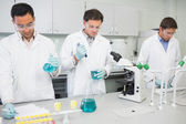 Group of scientists working at the lab — Stock Photo