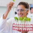 Stock Photo: Female scientist analyzing young plants at lab