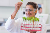Female scientist analyzing young plants at lab — Stock Photo
