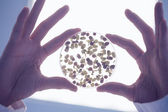 Researcher' hands holding sprouts in petri dish — Stock Photo
