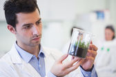 Young male researcher looking at young plant at lab — Stock Photo