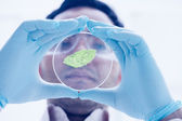 Scientist analyzing a leaf at the laboratory — Stock Photo