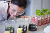 Female researcher looking at young plants at lab — Stock Photo