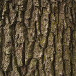 Brown rough bark — Stock Photo #36242757