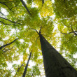 Low angle view of tall trees — Stock Photo #36242895