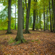 Tree trunks in the forest — Foto Stock