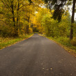 Country road along trees in lush forest — Stock Photo #36243075