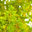 Detail shot of bright green leaves — Stock Photo