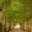 Walkway along lined trees in the park — Stock Photo