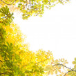 Autumnal leaves against the clear sky — Stock Photo