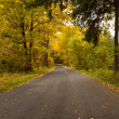 Stock Photo: Country road along trees in lush forest