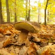 Close up of a mushroom on forest ground — Stock Photo
